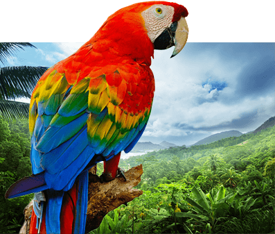 Scarlett Red Green Macaw