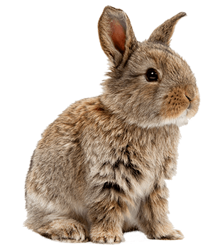 Cute Pet Bunny Rabbit