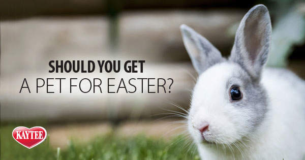 Should You Get a Pet for Easter