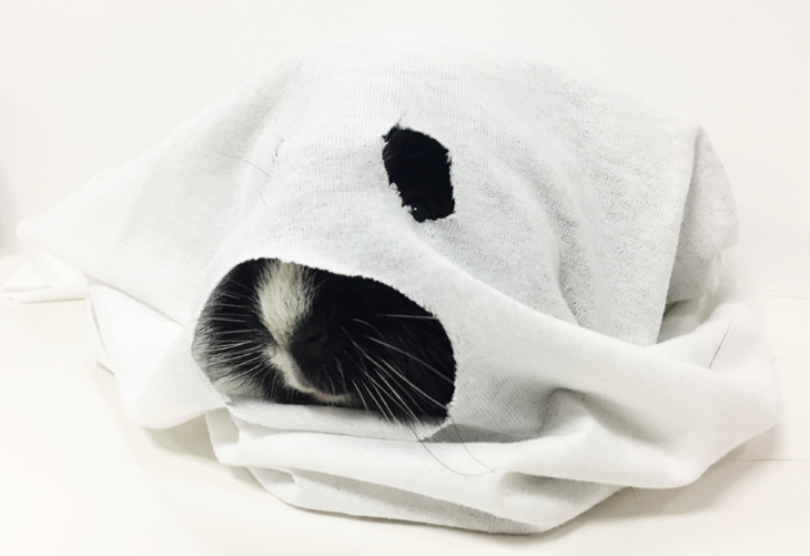 DIY Ghost Pet Costume