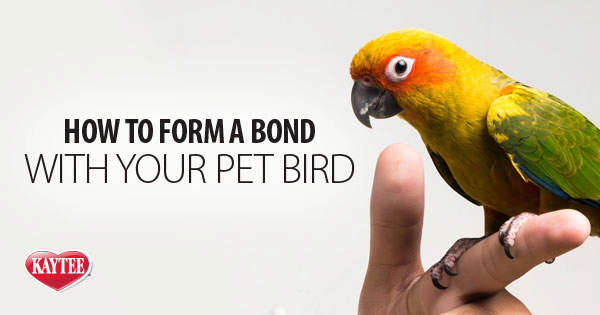 How to Form a Bond with Your Pet Bird