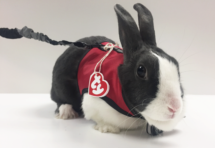 DIY Bunny Beanie Baby Pet Costume