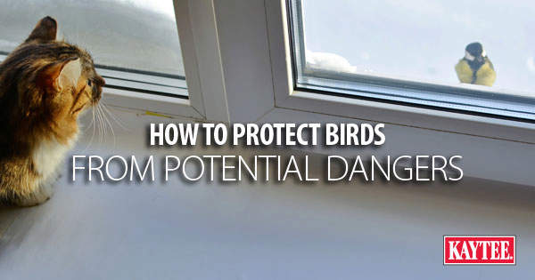 How to Protect Backyard Birds from Potential Dangers