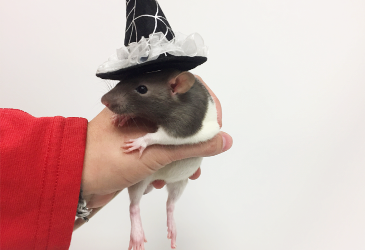 DIY Pet Costume- Wee Little Witch