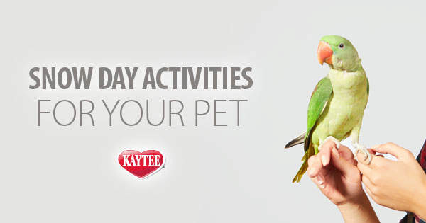 Snow Day Activities to Enjoy with Your Pet
