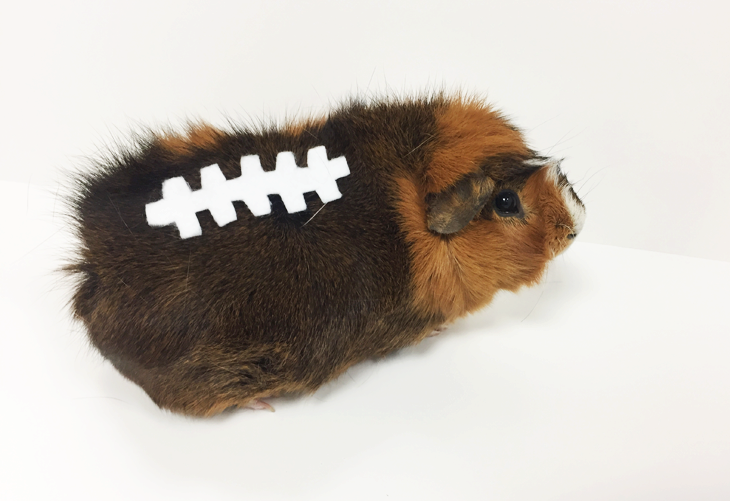 DIY Pet Costume- Furry Football