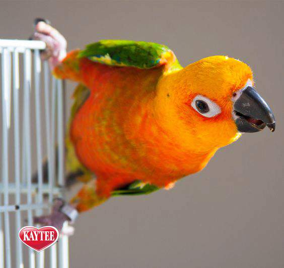 Pet Bird Supplies and Cage Accessories