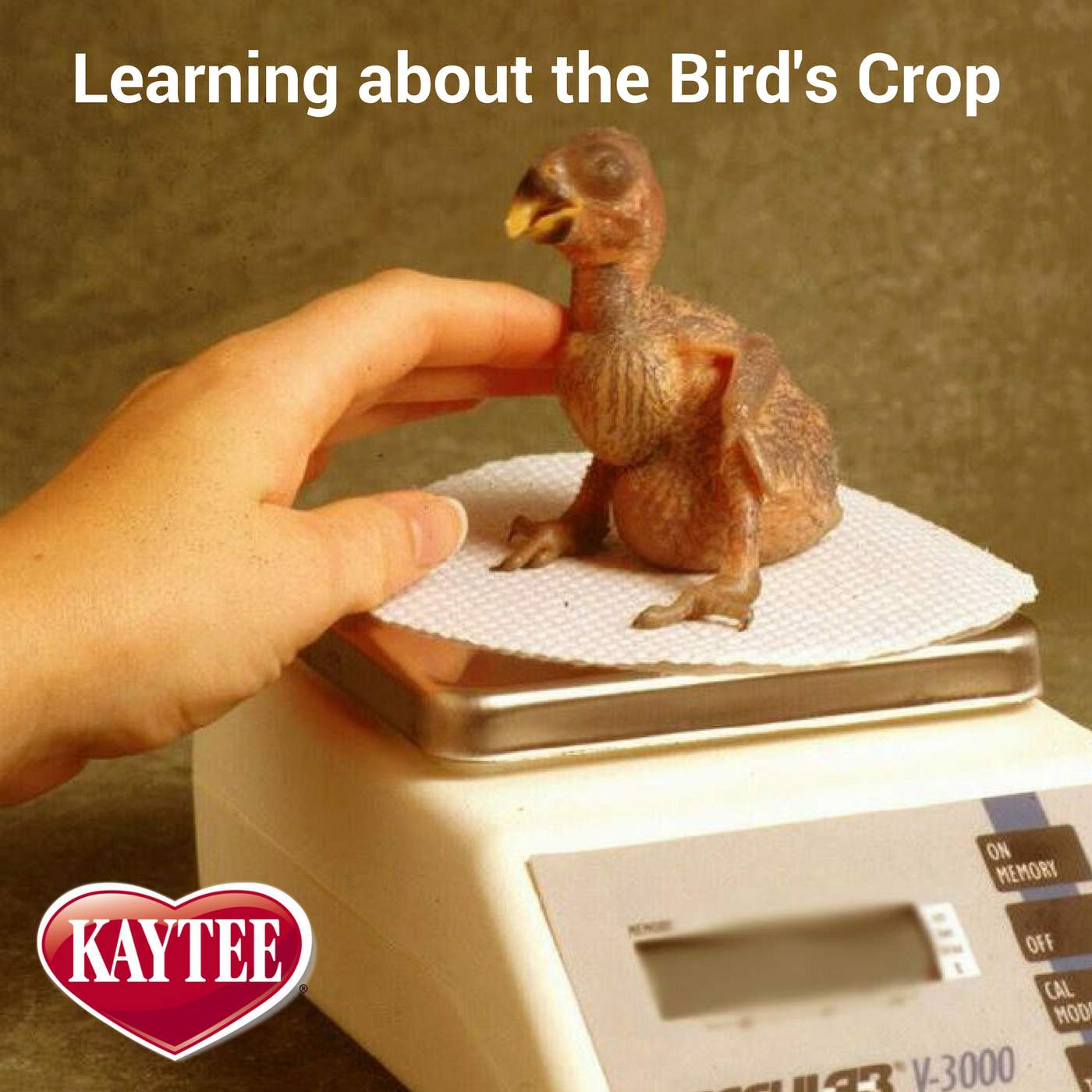 What is the Crop of a Bird?