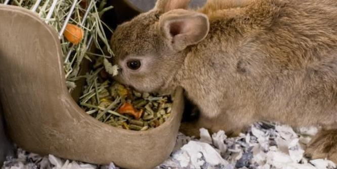 Ask The Small Animal Experts