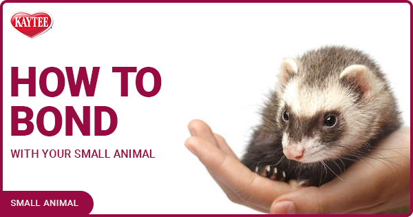 Kaytee How To Form A Bond With Your Small Animal Blog