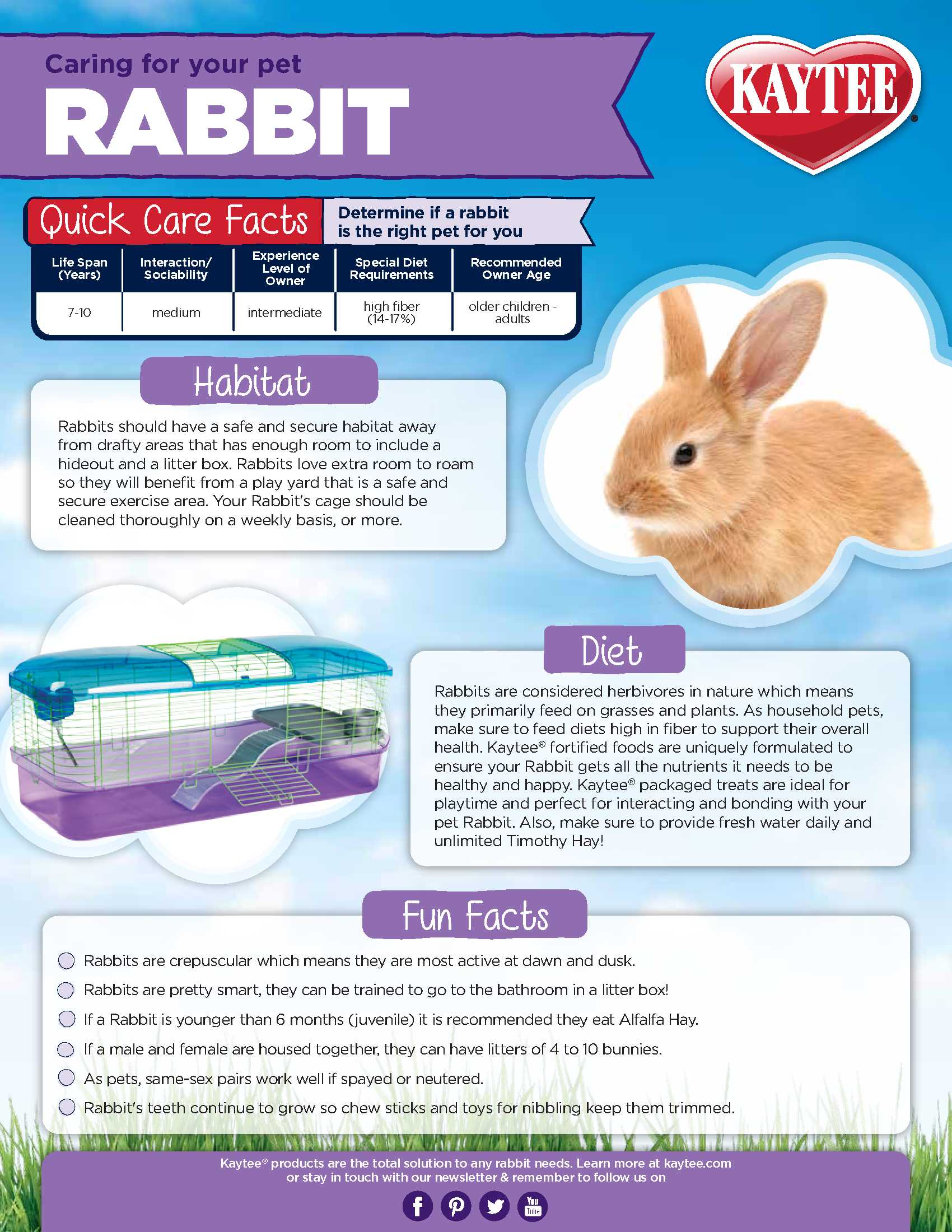 Rabbit Care Sheet