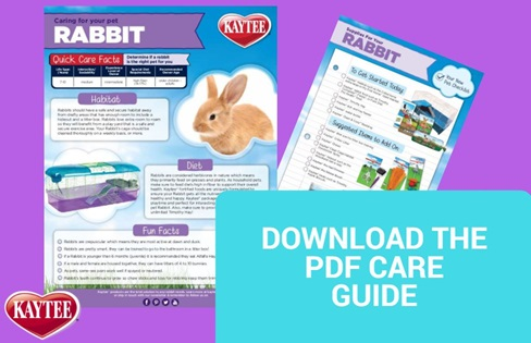 Rabbit Care Guide