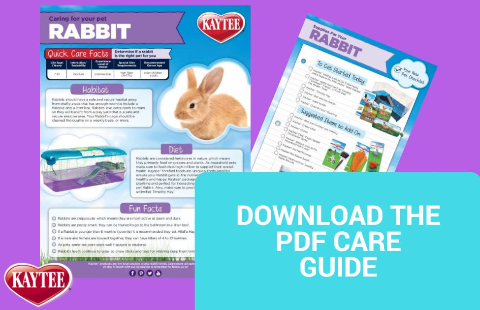 Rabbit Care Guide - Small Animals