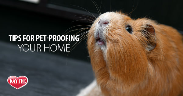 Pet Proofing your House