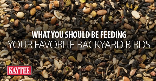 Backyard Birds' Favorite Bird Seed