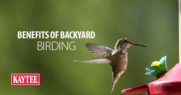 Benefits of Backyard Birding