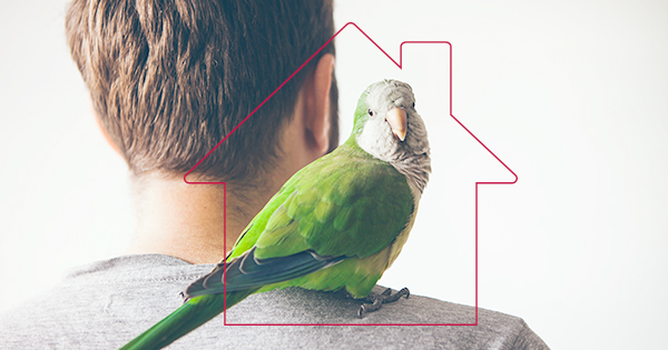 Best Houses Apartments For Pet Bird Owners