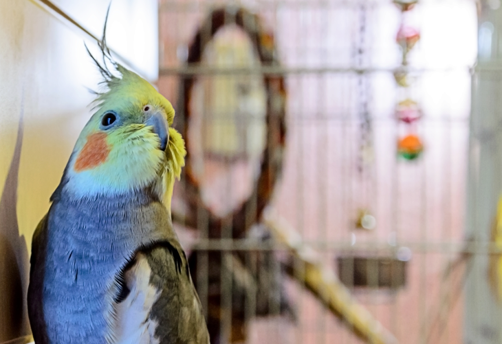 Cockatiel Blog Checklist