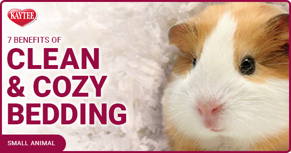 Kaytee 7 benefits of clean and cozy bedding