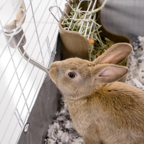 Kaytee How to Bond With Your Rabbit During Everyday Activities blog Post