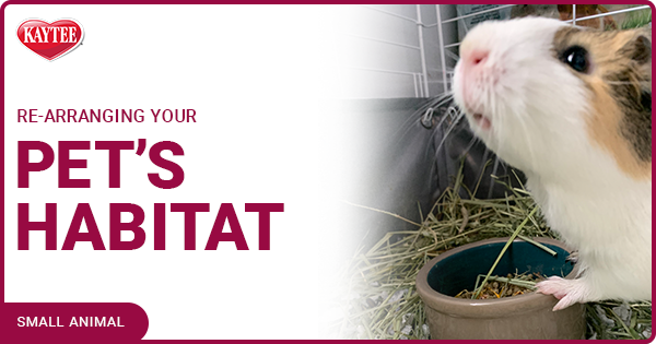 Rearranging your Pet's Habitat