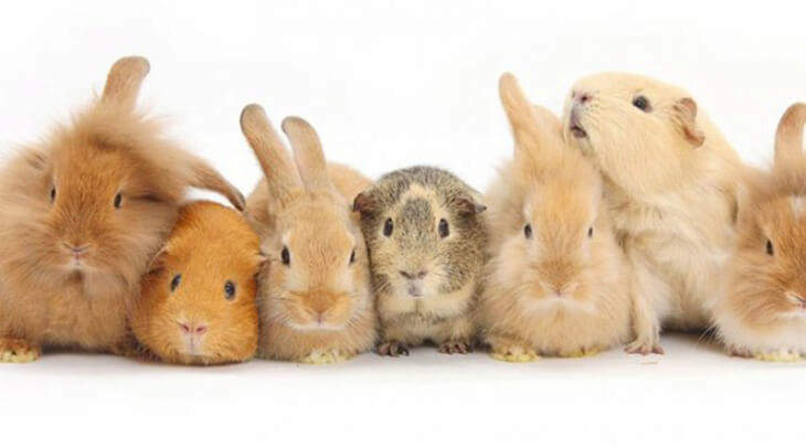 Choosing The Right Small Animal