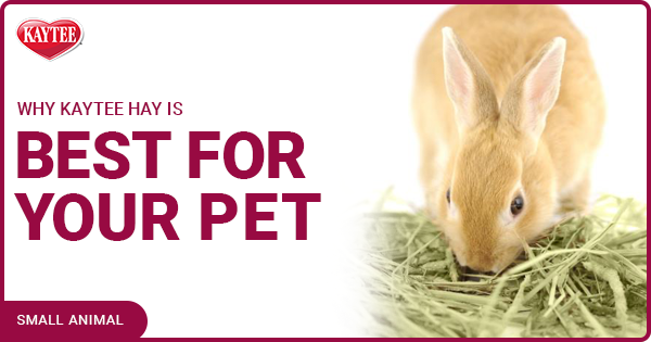 Why Kaytee Hay Is Best For Your Pet