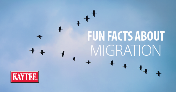 Fun Facts About Migration