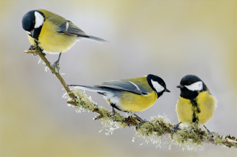 Kaytee Blog 7 Ways to keep birds cool in Summer