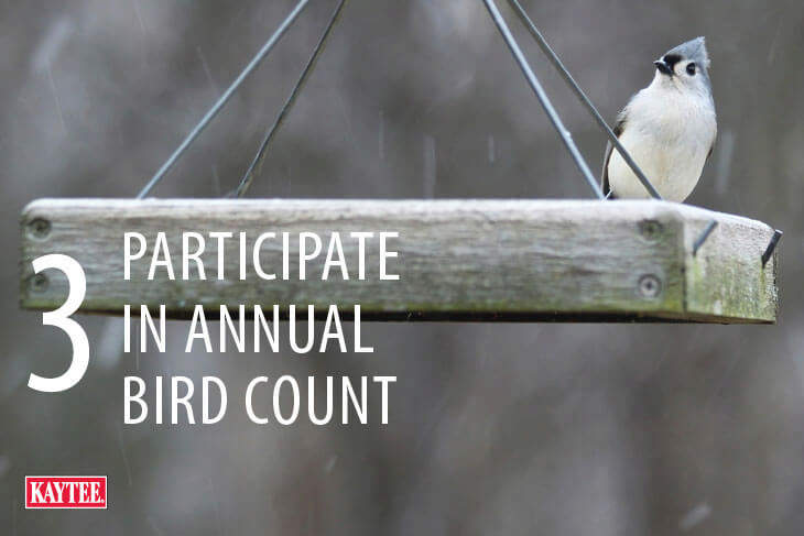 Annual Wild Bird Count