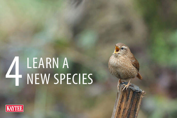 Learn a New Wild Bird Species