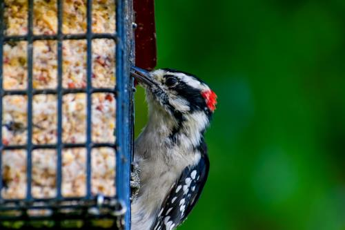 Why Suet Is A top Food Offer for Wild Birds