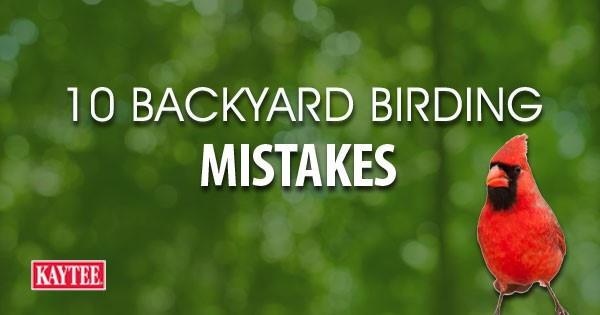 Bon 10 Common Backyard Birding Mistakes