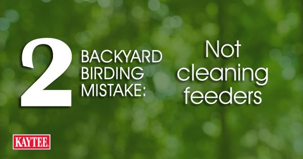 Not cleaning bird feeders