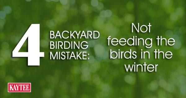 Not feeding the birds in the winter