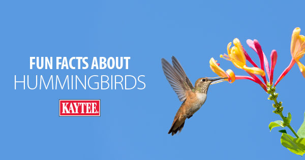 Facts About Hummingbirds