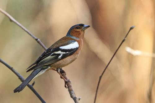 Kaytee How to Attract Spring Migrating Birds