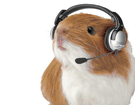 Guinea Pig wearing headphones