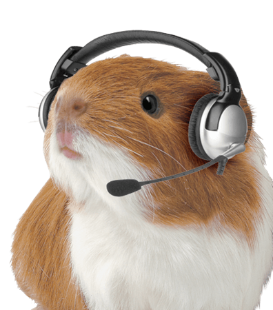 Guinea Pig with Headset