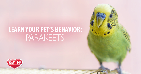 How To Easily Turn Your Parrot Into A Friendly Pet