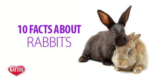 10 Facts About Rabbits