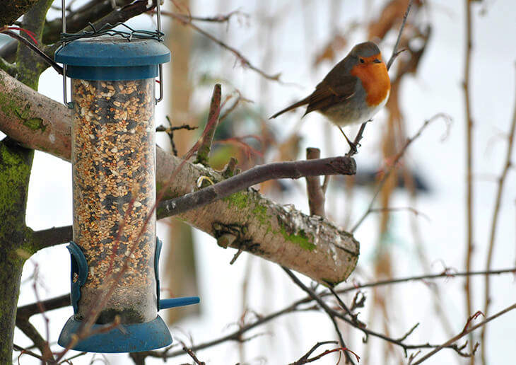 Outdoor Bird Feeder