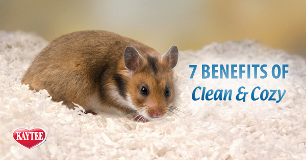7 Benefits of Clean & Cozy Pet Bedding