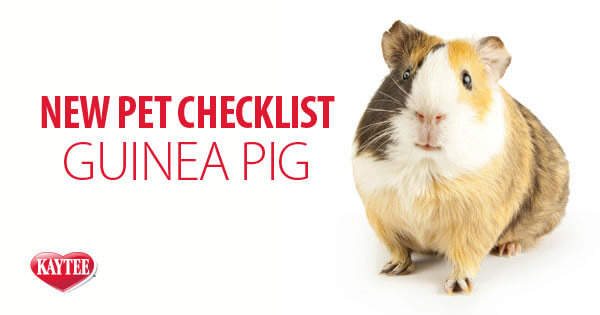 Kaytee New Pet Guinea Pig Checklist