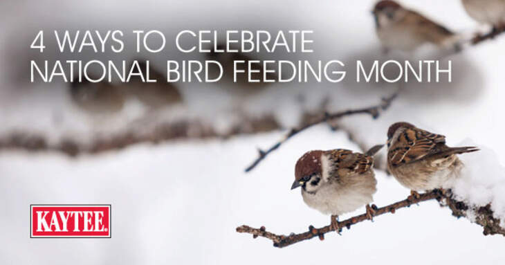 4 Ways to Celebrate National Bird Feeding Month